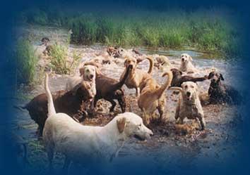 Service de pension pour chien offert par le chenil